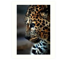 Feline Beauty Art Print