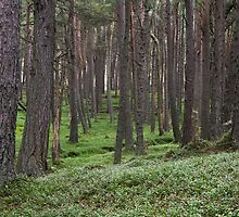 loch muick forest by codaimages