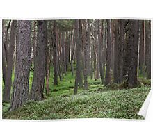 loch muick forest Poster