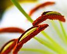 Lilly Flowers by Dean Mullin