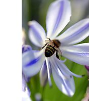 Bumble Bee Bum Photographic Print