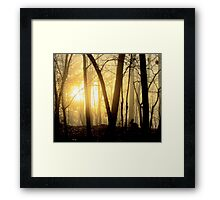Nibbling Bunny Meets Morning Sun in Foggy Forest Framed Print