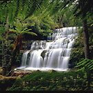 Liffy Falls, Tasmania (under Down Under), Australia by Debbie Steer