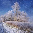 Snow Day by Philippe Sainte-Laudy