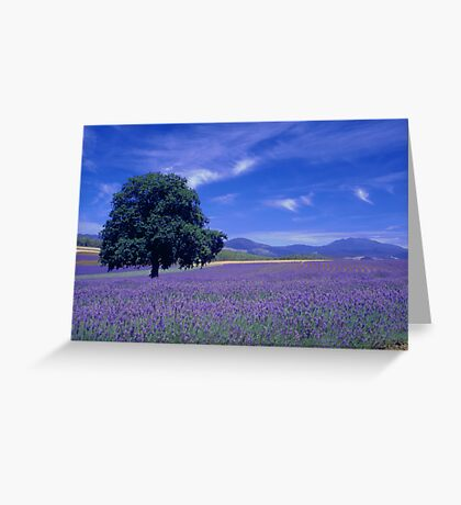 The Bridestowe Estate Lavender Farm, Tasmania, Australia Greeting Card