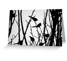 Wagtail Roost II Greeting Card