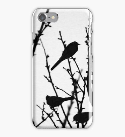 Wagtail Roost III iPhone Case/Skin