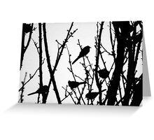 Wagtail Roost III Greeting Card