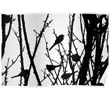 Wagtail Roost III Poster