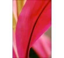 Pink Parfait  Photographic Print