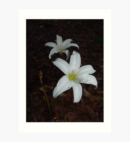 Atamasca Lilies Art Print