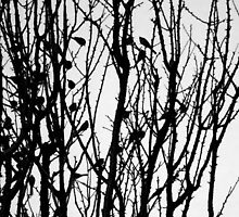 Wagtail Roost IV by GreyFeatherPhot
