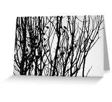Wagtail Roost IV Greeting Card