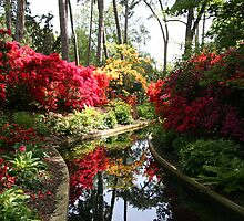 Rhododendrons in a mirror by Fran0723