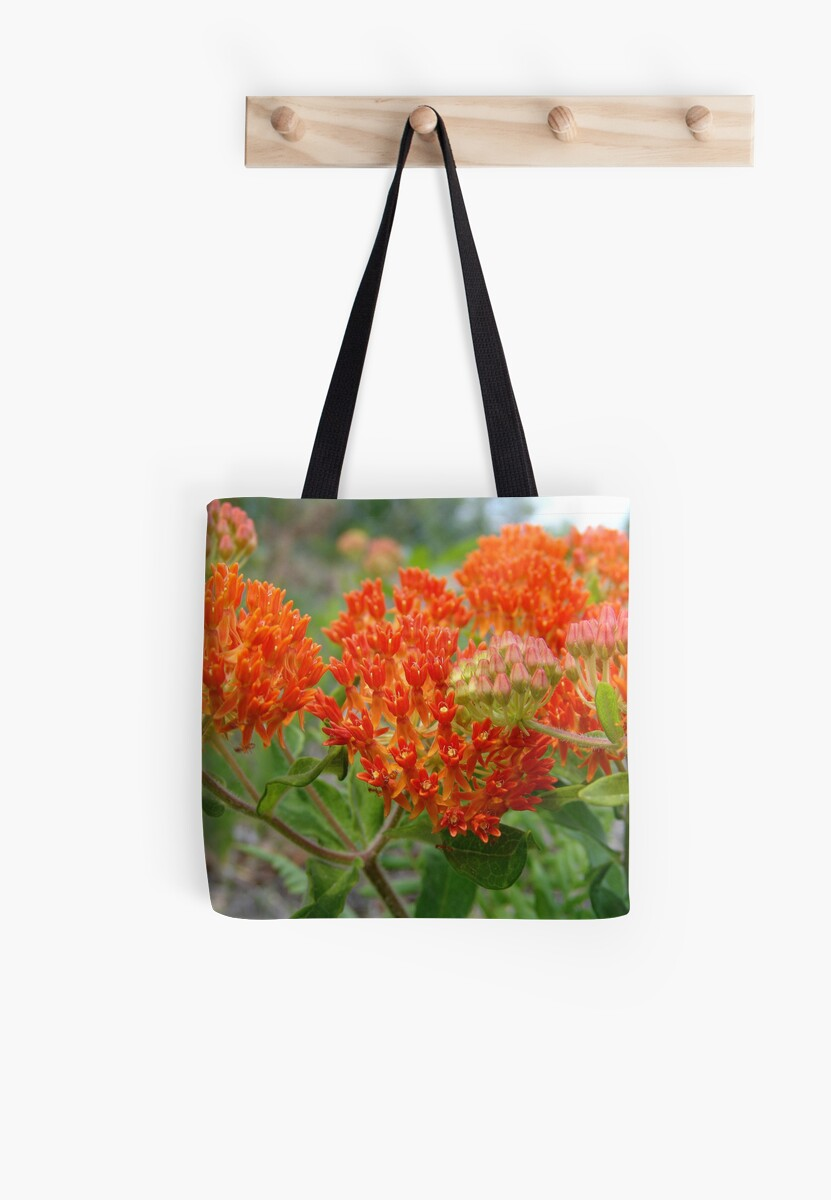 Asclepsia (Butterfly Weed) by May Lattanzio