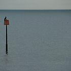 Lone bird by dbarden