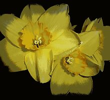 Daffodils..............................Most Products by Fara