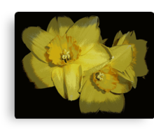 Daffodils..............................Most Products Canvas Print