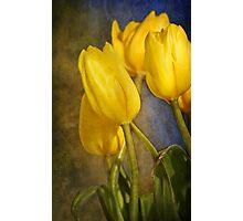 Katie's Tulips Photographic Print