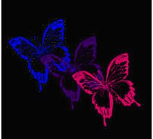 Bisexual Flag Butterflies on Black Photographic Print