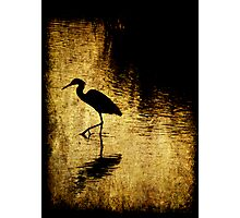 Bayou Stepping Photographic Print