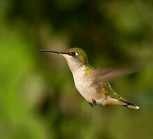 hummingbird by J.K. York