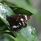 butterfly after rain by Jeannine de Wet