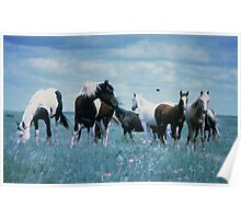 HORSES IN THE MEADOW Poster