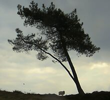The Tree, and new born lambs by ienemien