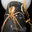 psssssssttttttt!!!!!!!! got any bugs in your pocket by LoreLeft27
