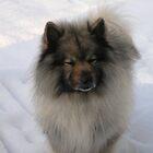 Snow dog! by Jamaboop
