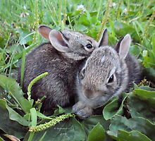 Two Adorable Baby Bunnies!!!  by Barberelli