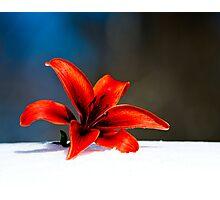 Beauty on Ice Photographic Print