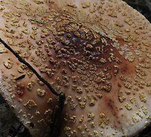 Mushroom 6535 by Doug Wilkening
