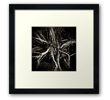 Sage Brush Framed Print