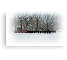 Cows in Winter Field Canvas Print