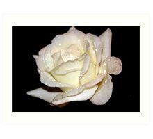 Alluring Rose Art Print