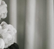Analog silver gelatin 35mm film photo of white rose flowers in vase Sticker