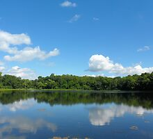 Bright Blue Sky with Green Landscape in the USA by Barberelli