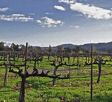 Vineyard by Steve Cozart