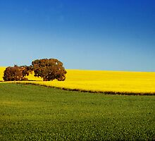 Cowra,  New South Wales. by Andy Newman