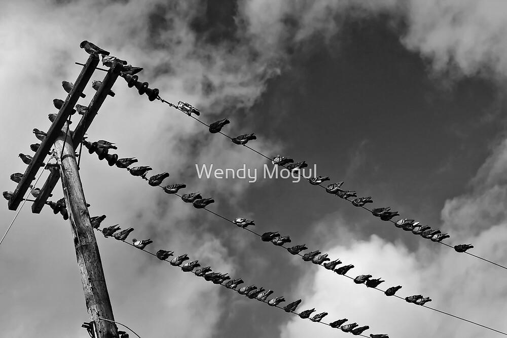 Bird on a Wire by Wendy Mogul