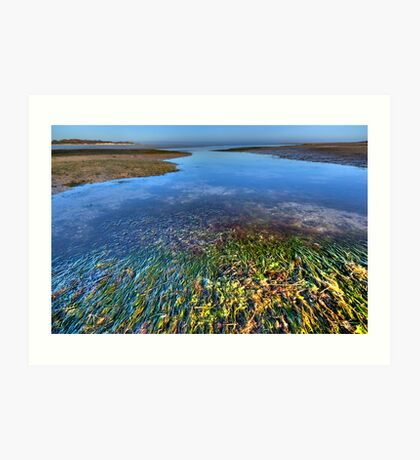 Sea Grass Art Print