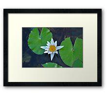 Lily Framed Print