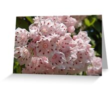 Mountain Laurel  (Kalmia latifolia) Greeting Card