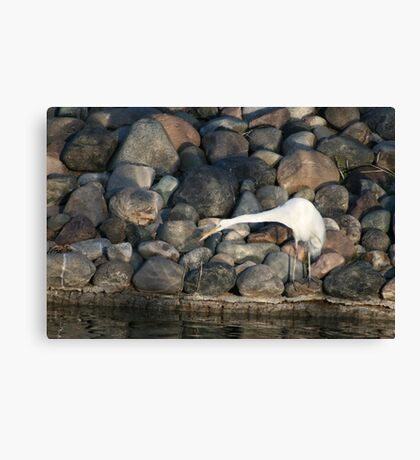 Streched to the max!! Canvas Print