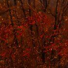 Close to Autumn by Eryn Nickerson