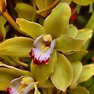 LA Arboretum Orchid by Jawaher