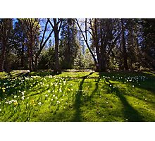 Shadows of Spring Photographic Print