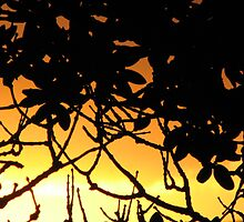 Pohutukawa silhouette at sunset by Karen Doidge